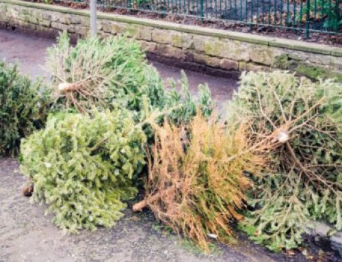Your old christmas tree can be a gift that keeps on giving to the environment!
